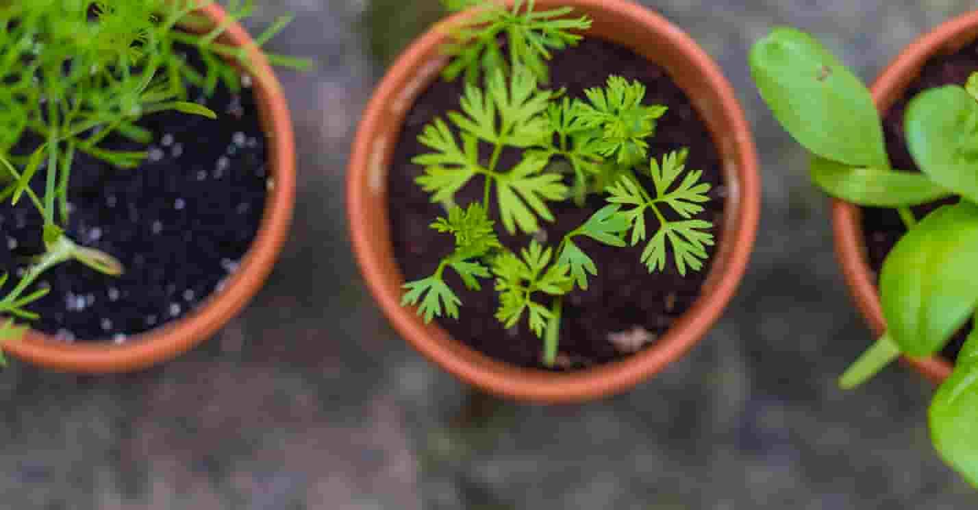 起業 アイデア 家庭菜園