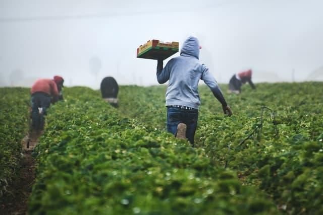 脱サラ 農家